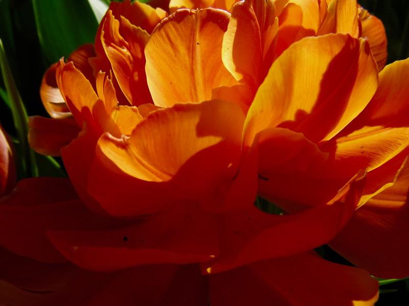 Waves of Orange