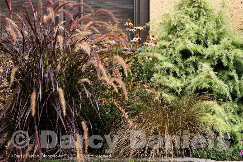 Small private garden in NE Portland, Oregon. Garden designed by Darcy Daniels of Bloomtown Gardens.