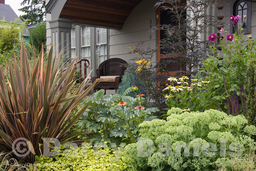The richly textured plantings emphasize foliage and form and are accented by long-performing blooming plants.  Garden Design: Darcy Daniels of Bloomtown Gardens.