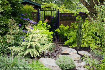 The richly textured plantings emphasize foliage and form and are accented by long-performing blooming plants.  Garden Design: Darcy Daniels of Bloomtown Gardens. Landscape Construction and Masonry: Pete Wilson Stoneworks.