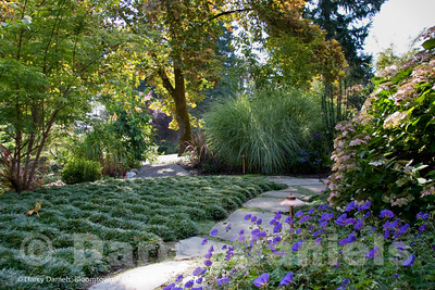 Woodland Garden with Foliage Focus