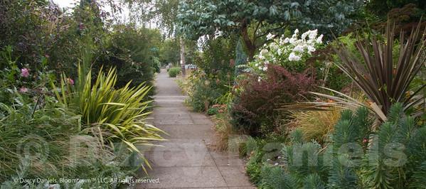 Front yard garden of Darcy Daniels in Portland, Oregon