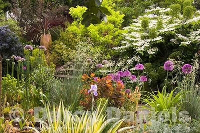 Exuberant Spring Scene in Darcy's Home Garden.
