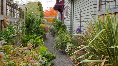Darcy Daniels kitchen garden in Portland, Oregon