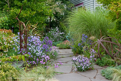 Darcy Daniels front yard garden in late-season
