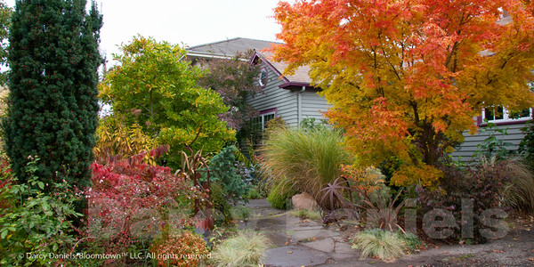 Fall Color in Darcy's front yard garden in NE Portland, Oregon.