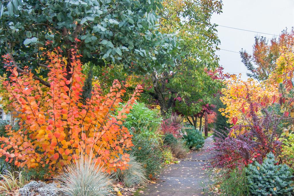frontyard garden in fall