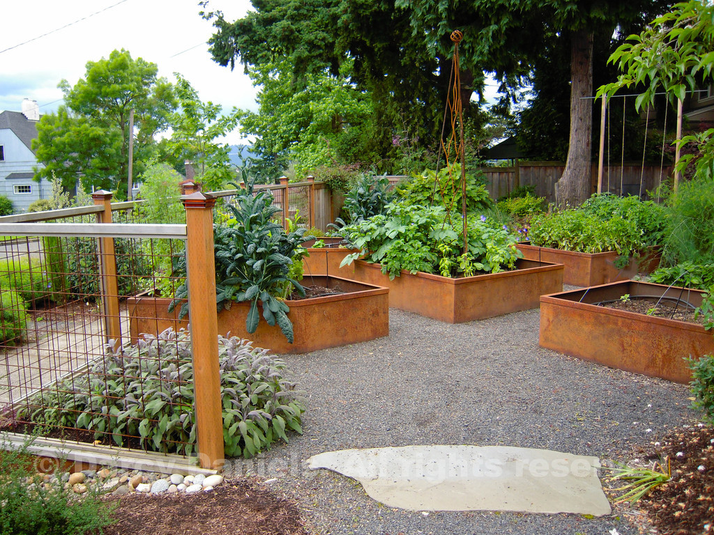 """Vegetable garden made up of steel raised beds laid out in a pleasing geometric pattern. Open steel mesh panel provides perfect support for rambling veggie vines.  Garden Design: Darcy Daniels, Bloomtown Gardens,  <a href=""""http://www.bloomtown.net"""">http://www.bloomtown.net</a>. Steel fabrication of raised vegetable boxes and fence: Rob Trautmann. Garden contruction: Pete Wilson Stoneworks."""