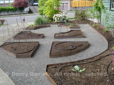 This streetside ktchen garden's framework is created by steel edged raised beds laid out in a pleasing geometric pattern. Garden design: Darcy Daniels, Bloomtown Gardens. Landscape construction: Pete Wilson Stoneworks.