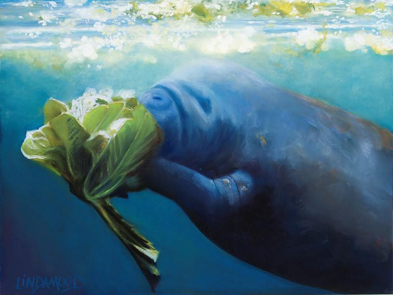 """Manatee Mangee"" (pastel on Ampersand pastelbord) by Patsy Lindamood"