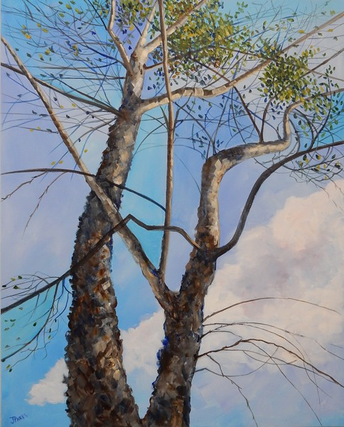 """Cottonwood"" (acrylic) by Joy Parks Coats"