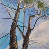 """Cottonwood"" (acrylic) by Joy Parks Coats"
