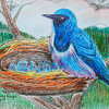 """Ultramarine Flycatcher on Nest"" (colored pencil and pen) by Raymond Raza"