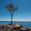 """Lone Tree"" (photography) by Laura Mathews"