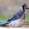 More Bird Bath Antics