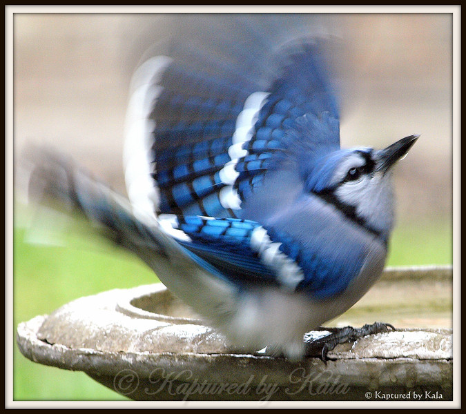 The Beauty of a Wing in Motion