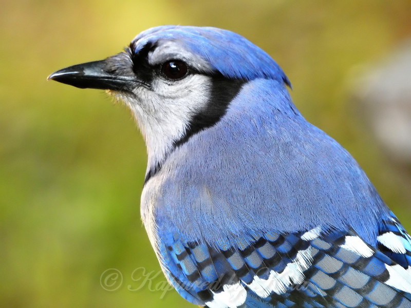 Portrait in Blue