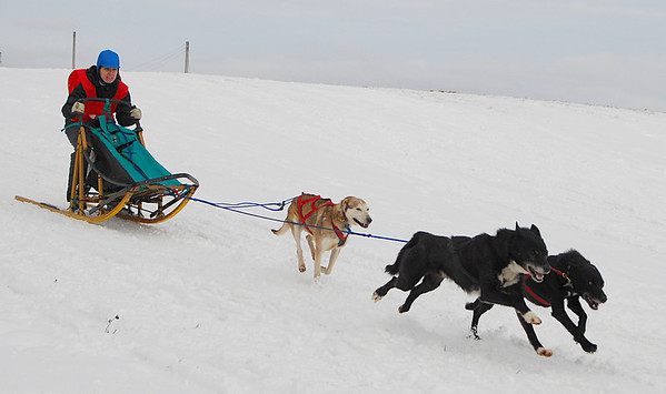 Cannington Dog Sled Races 2010