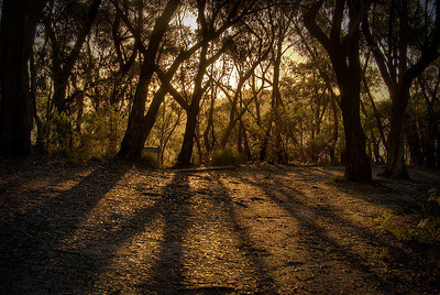 """Bushland along Mt Victoria's """"Zig Zag"""" track as seen by late afternoon autumn light - Blue Mountains, New South Wales, Australia"""