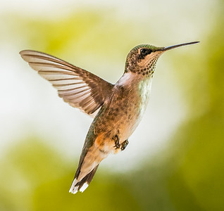 Hummers-6018