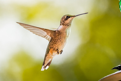 Hummers-6015