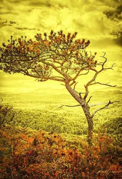 Mountain Ridge Tree