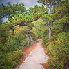 Hilltop Path