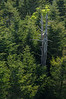 Trees from Clingmans Dome