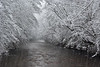 "<p></p><div id=""centered_description""> Winter Storm at Davidson River, Pisgah National Forest</div>"