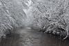 "<p></p><div id=""centered_description""> Winter Storm at Davidson River, Pisgah National Forest</div>"