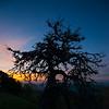 Sunrise & Pine