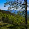 Blue Ridge Spring
