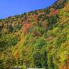 Leaf Color Cruising