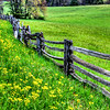 Split Rail Beauty