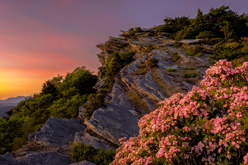 Mountain Laurel Sunset