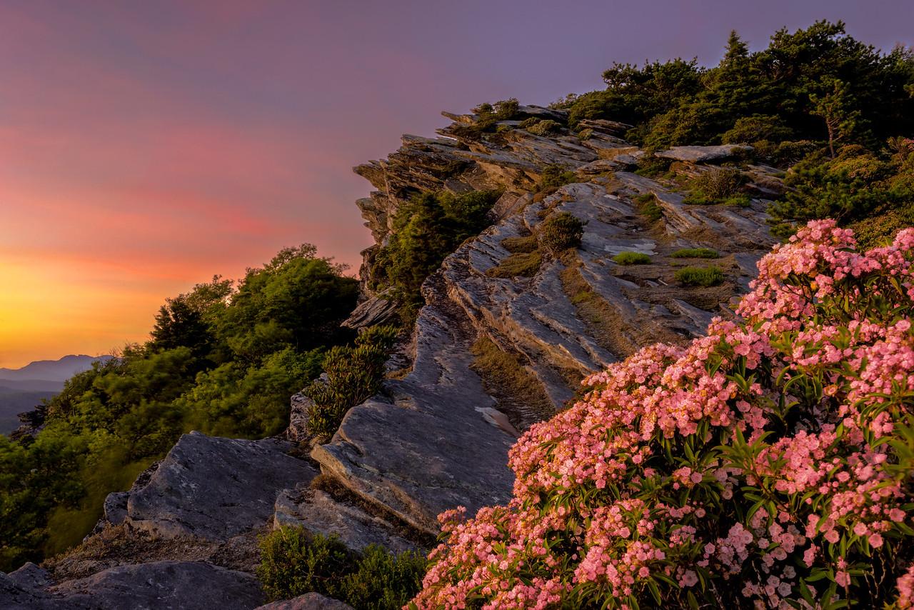 Mountain Laurel Sunset