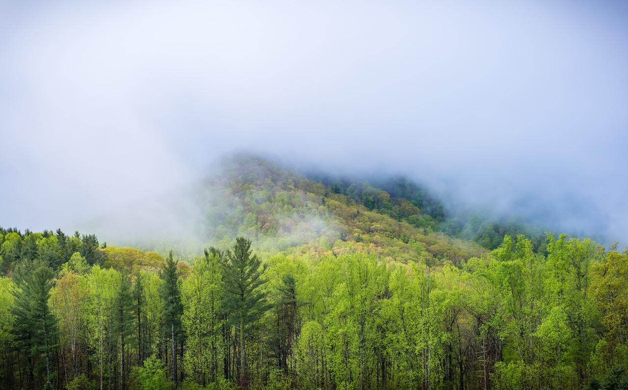 Early Spring Fog
