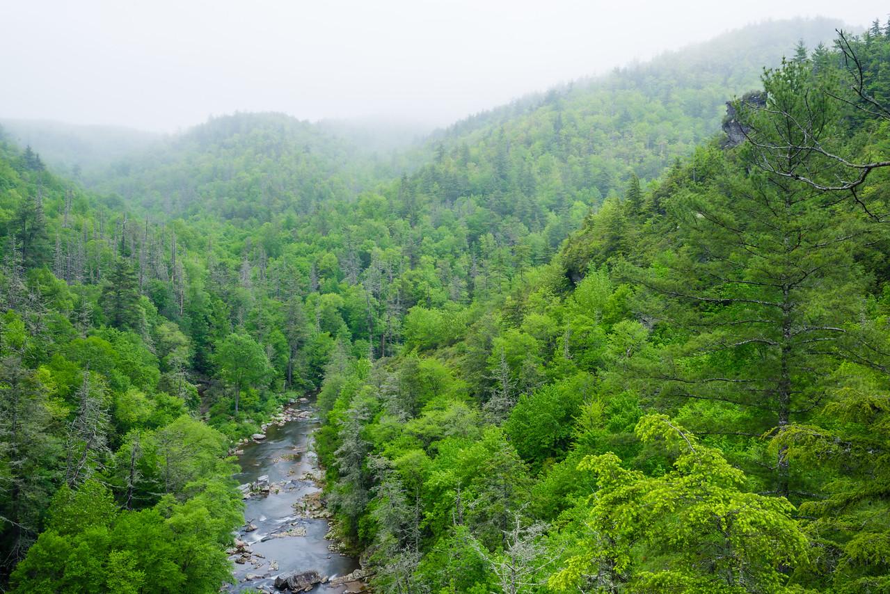 Spring Fog in Linville Gorge