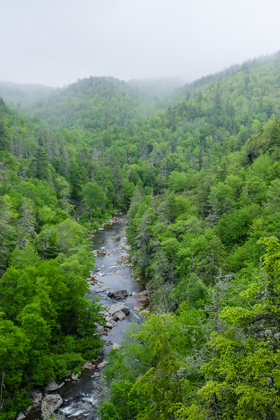 Foggy Linville Gorge in Spring