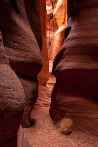 Canyon X