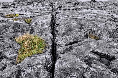The Burren is Alive
