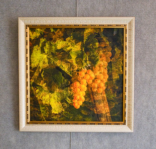 $25 - Grapes of Italy