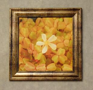 Monterey Little Flower - $20