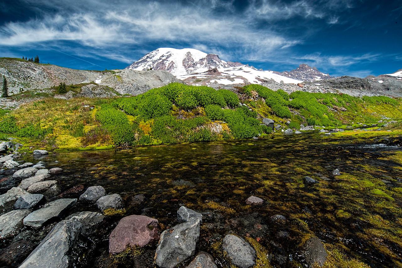 Rainier's Beauty Abounds