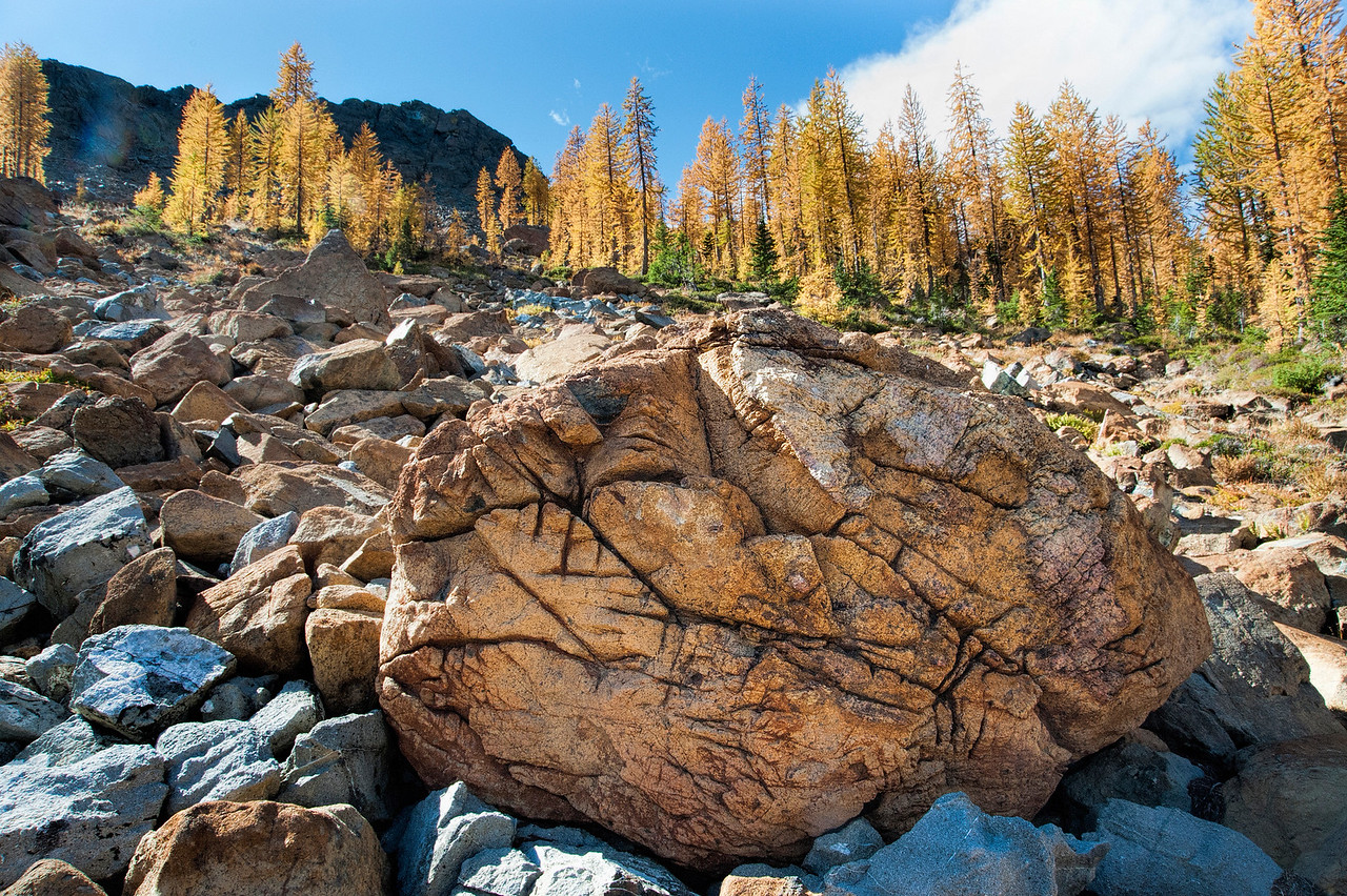 Rock and Larches