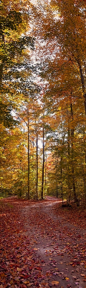 Peaceful Fall Forest Driveway - Vertical