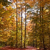 Peaceful Fall Forest Driveway