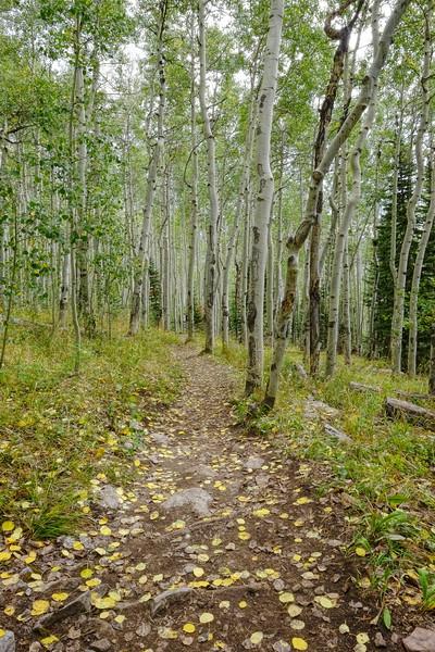 Aspen Walk