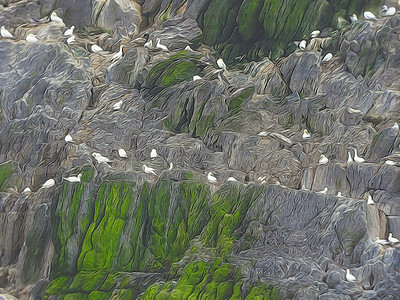 Little Skellig Painted Birds