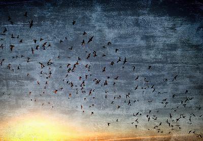 The Flight of the Bats